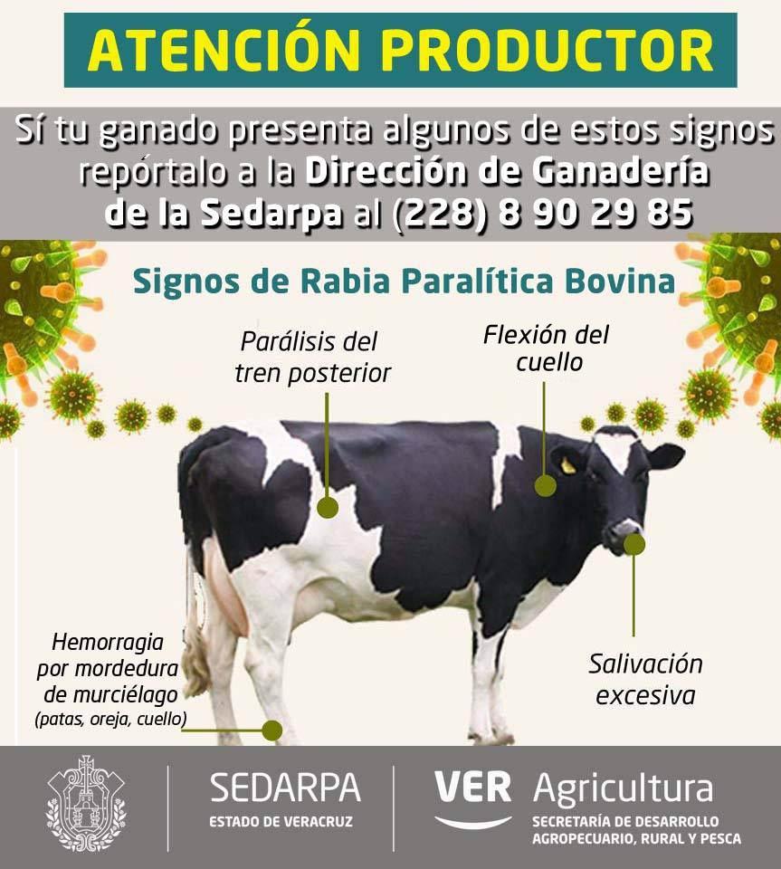 Veracruz - Productores